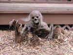 Creepy crawly corpse