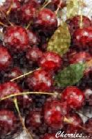 Cherries by ayla-c