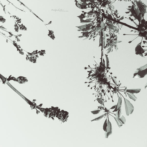 ma fleur.