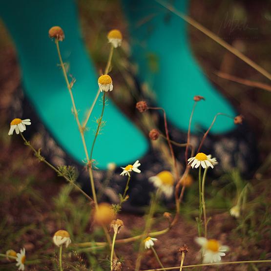 Poklanjam ti sliku Lady_of_the_flowers__by_indiae