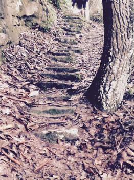 Forest Stairwell