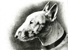 Bull Terrier by NestorPriest
