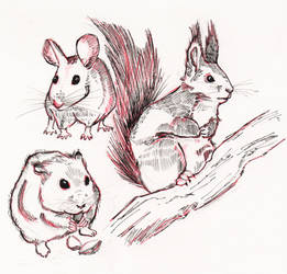 Day5: Rodent.