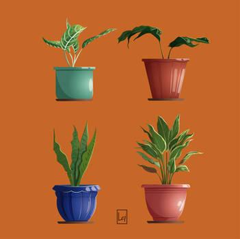 Plants.
