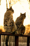 Brothers At Sunset by Aoi-kajin