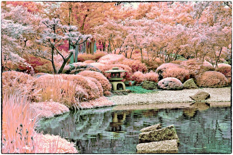 Rainbow japanese pond by helios spada on deviantart for Japanese pond plants