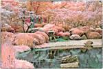 Rainbow Japanese Pond