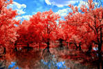 A Red Path by helios-spada