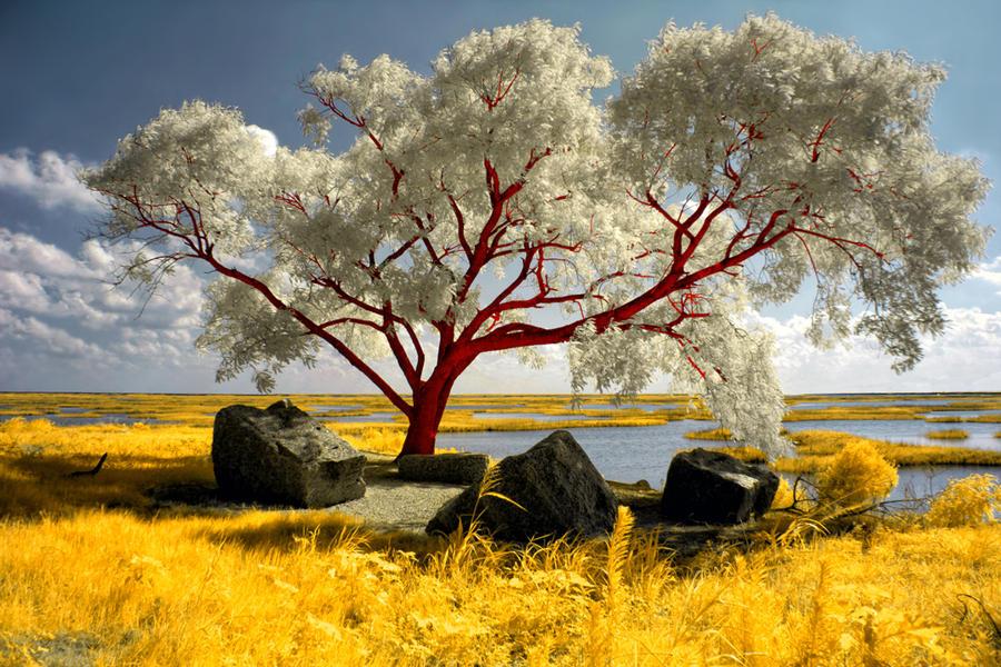 Red Beach Tree by helios-spada