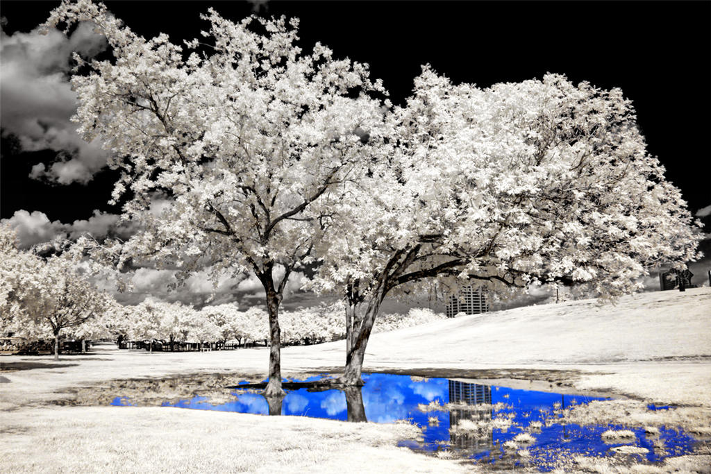 Oasis by helios-spada