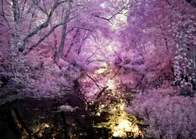 A Purple Path by helios-spada