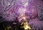 A Purple Path