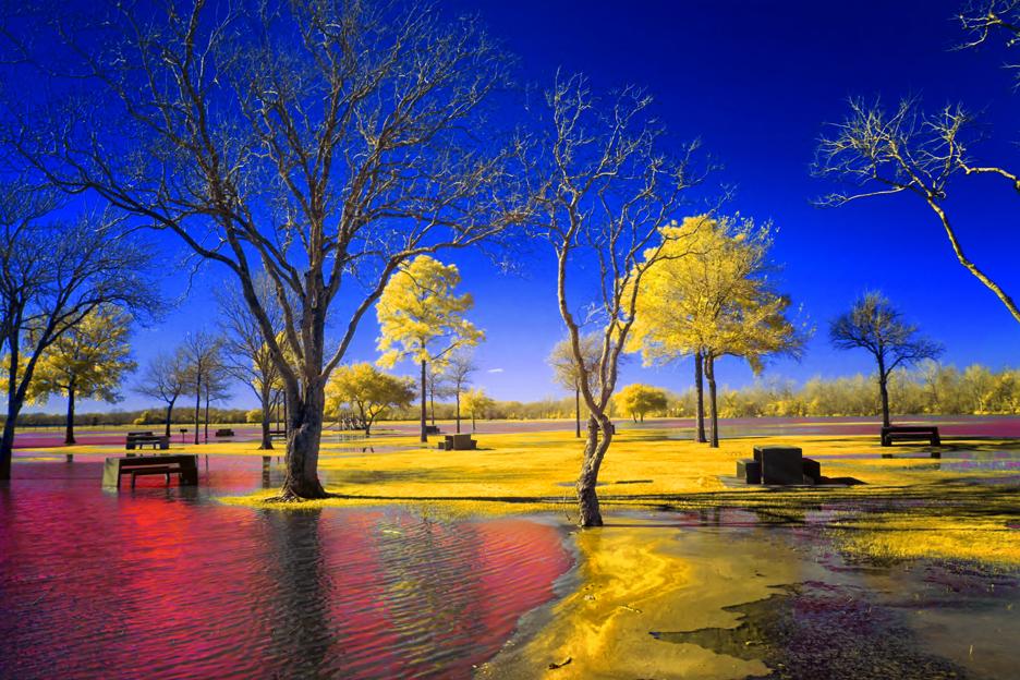 Swamp Park by helios-spada
