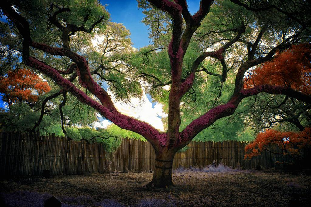 Zoo Tree by helios-spada