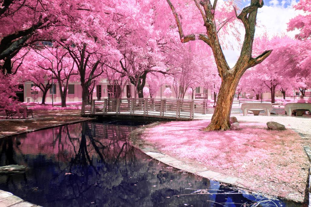 City Park by helios-spada