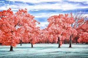 Red Park by helios-spada