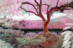 Intimate Tree