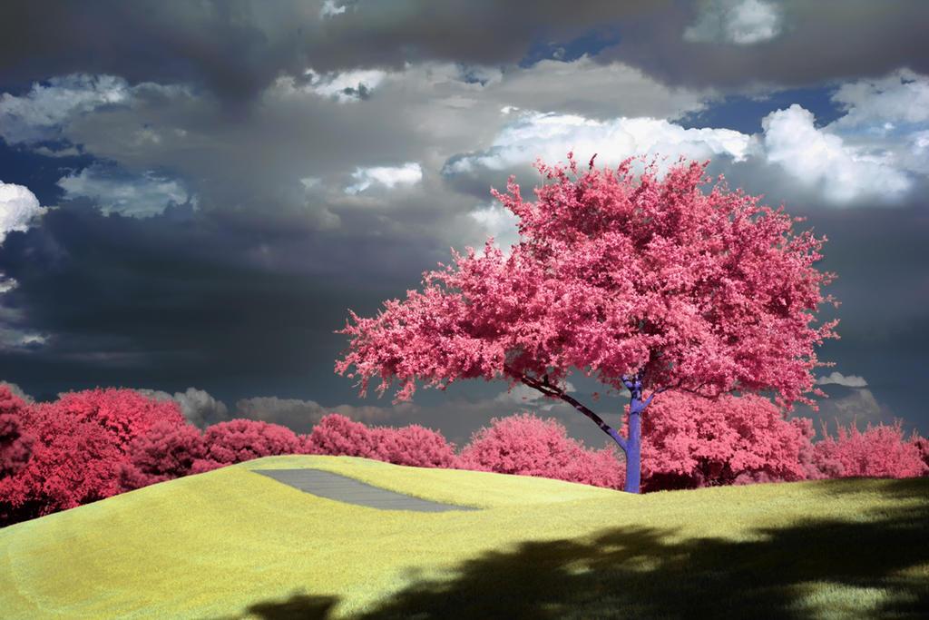 Hill Tree by helios-spada
