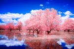 Reflected Glory by helios-spada