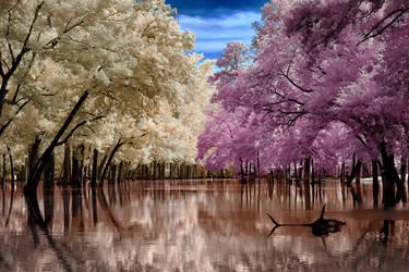 Cherry Creek by helios-spada