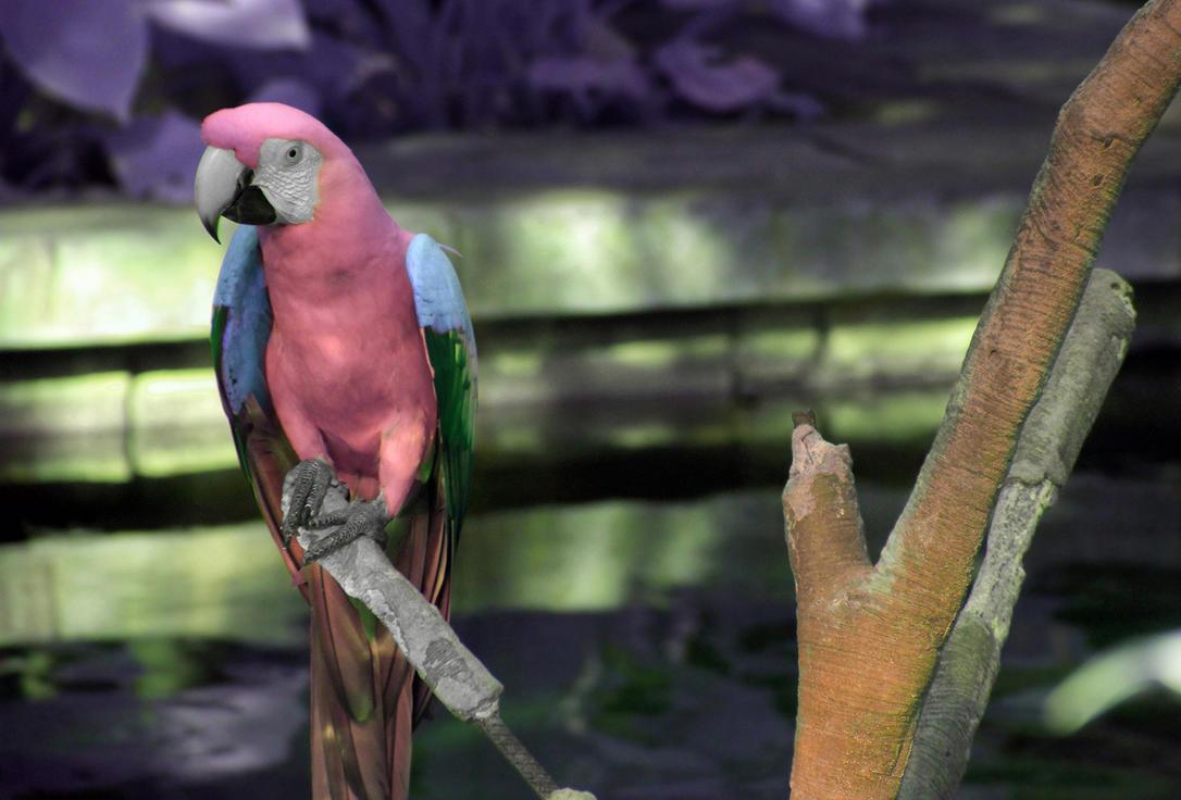 Emerald Winged Parrot of Mooreland II by helios-spada