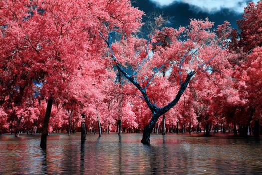 Y Tree II
