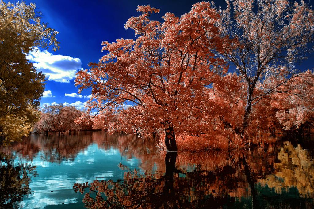 Intellious Pond by helios-spada