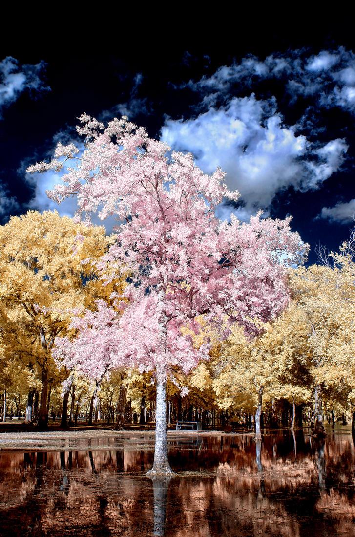 Crescent Tree by helios-spada