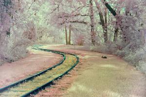 Bunny's Tracks by helios-spada