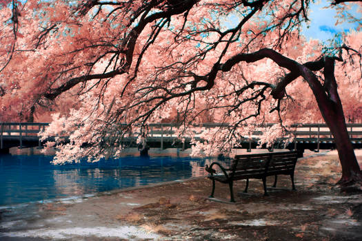 Bench by Tree