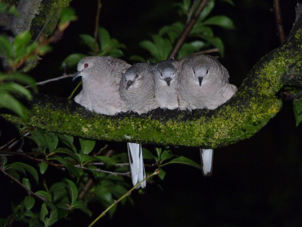 Chirpy snuggles by Sonicdooplissfan