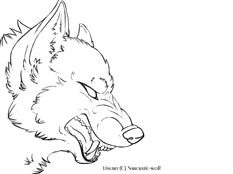 Wolf snarling side view drawing - photo#13