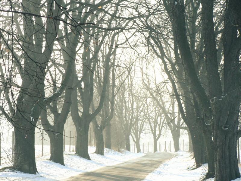 vagabond's alley, part winter by snusmumrikenn