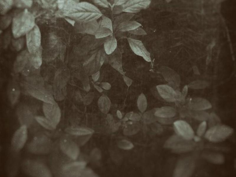 botanical by snusmumrikenn