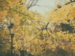 late autumn, in the park 2 by snusmumrikenn