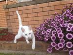 Tripaw'd Kitty by RakshaWw