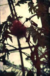 Exotic Flower by KoryGuzPhotography
