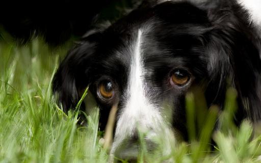 ~Black and white puppy! by Princ3ssWolfi3