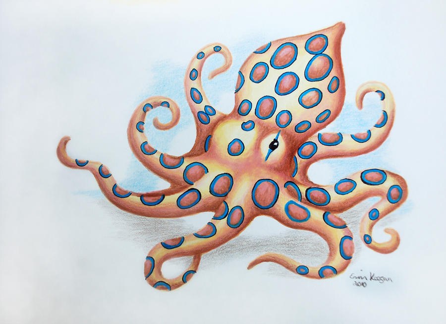 top octopus drawing tattoo images for pinterest tattoos. Black Bedroom Furniture Sets. Home Design Ideas