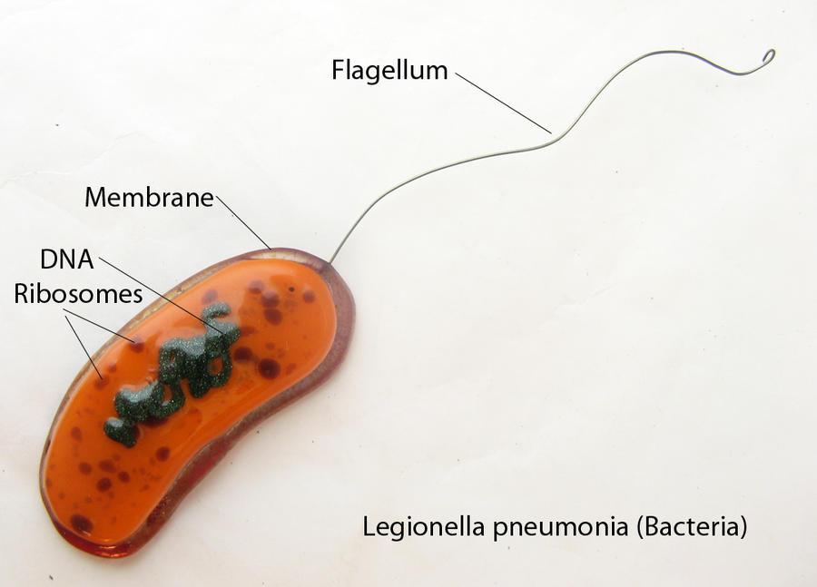 Legionella pneumonia Bacteria Fused Glass by trilobiteglassworks ...