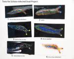 Schistosoma Infected Slug Tests by trilobiteglassworks