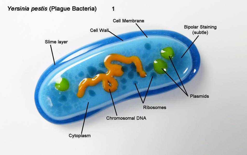 What Is Yersinia Pestis