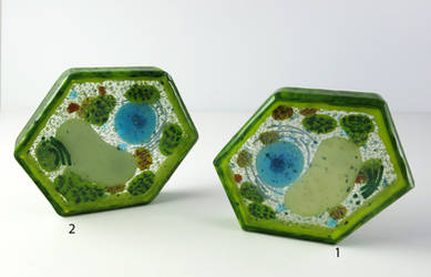 Plant Cell Glass Paperweights