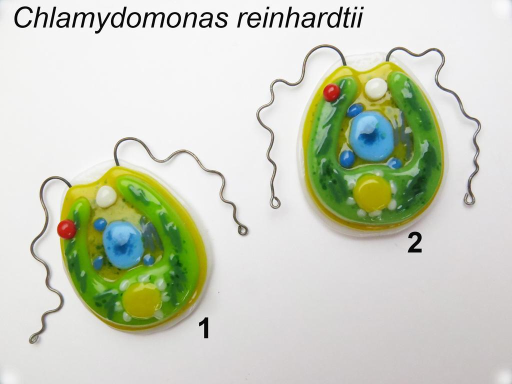 Chlamydomonas reinhardtii fused glass pendants by trilobiteglassworks