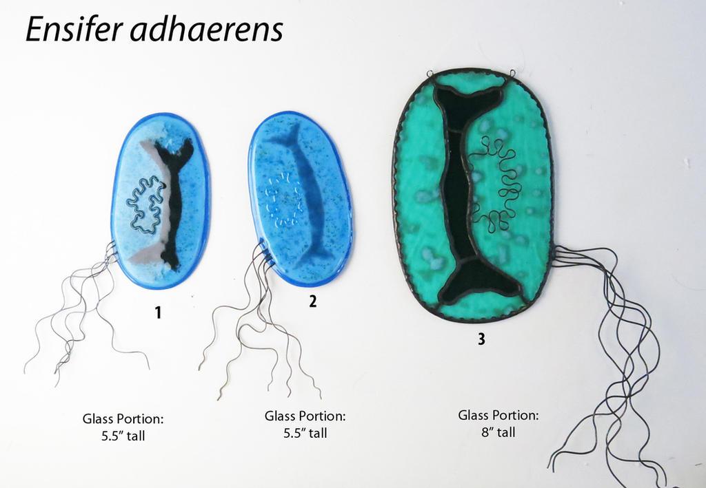 Ensifer adhaerens  Bacteria Glass Ornaments by trilobiteglassworks