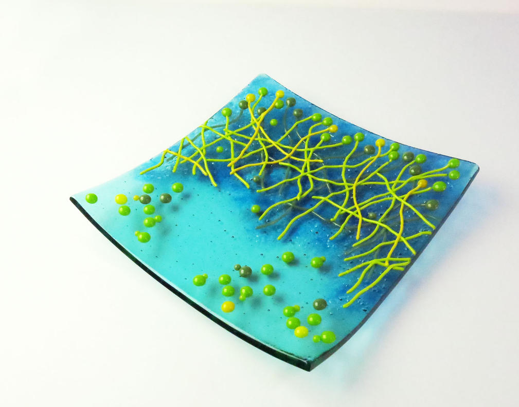 Candida albicans fused glass dish by trilobiteglassworks