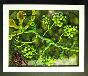 Parasitic Microfungus (Escovopsis) of Leafcutteer by trilobiteglassworks