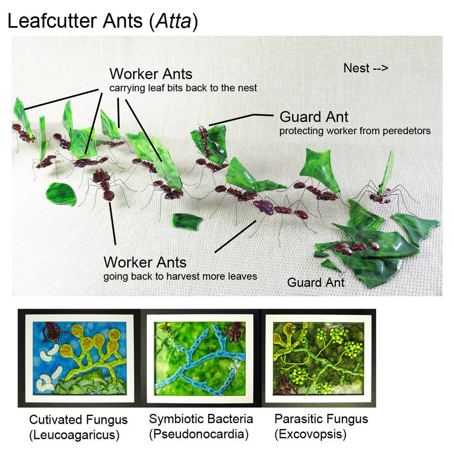 Leafcutter Ant Highway With microbiome by trilobiteglassworks