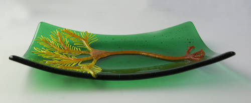 Crinoid Fused Glass Dish by trilobiteglassworks