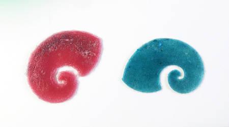 Proto Snails for Crinoid Project by trilobiteglassworks